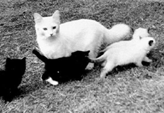 Josephine met kittens Gueber, Mitts, Tiki en Kyoto