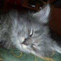 7-kitten-quty
