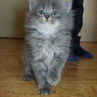 8-kitten-quty