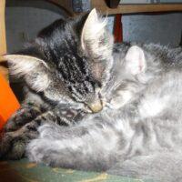 9-kitten-quty