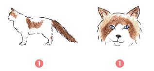 Ragdoll uiterlijke kenmerken