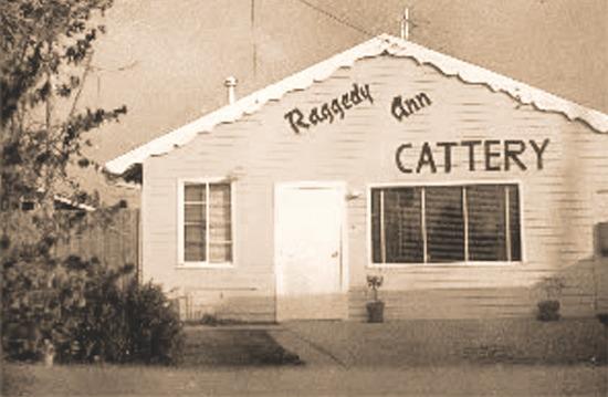 rageddyanncattery