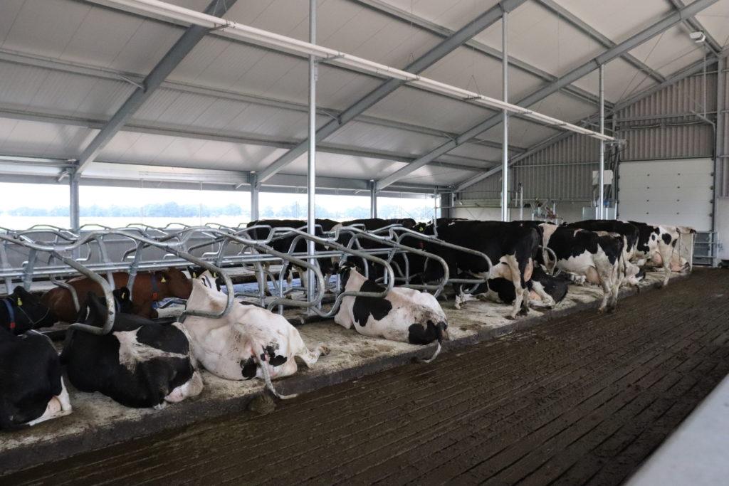 Onze koeien