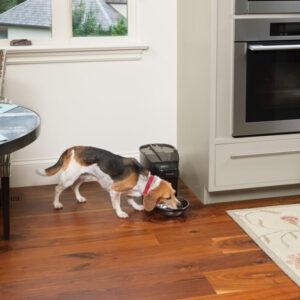 Petsafe Healthy Pet Simply Feed Programmable Digital Pet Feeder