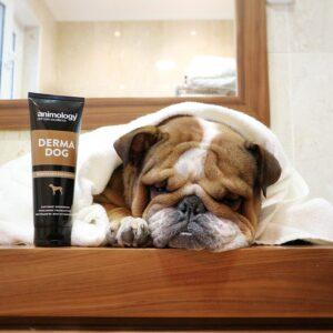 Animology Derma Dog Shampoo 4x250ml