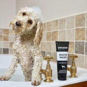 Animology White Wash Shampoo 4x250ml