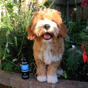 Animology Mucky Pup Droog Shampoo 4x250ml