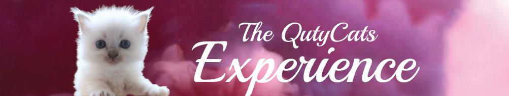 experience-header