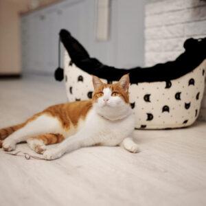 Kattenmand Astro