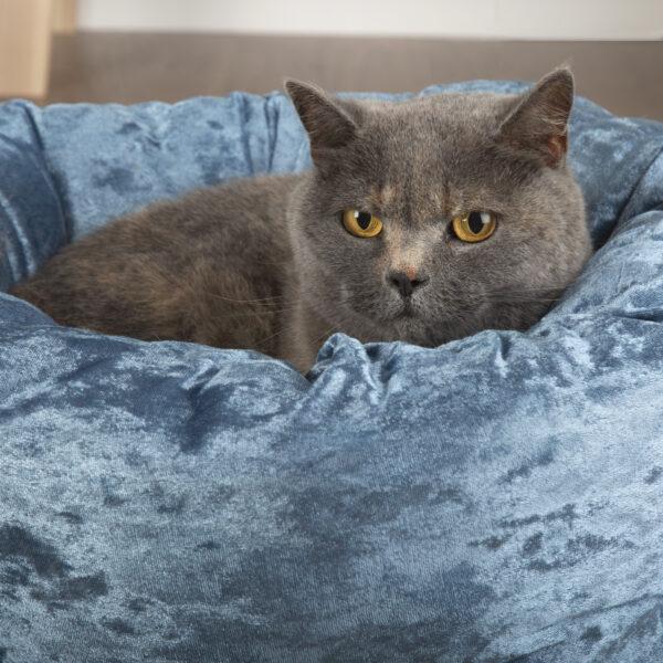 scruffs velvet pet bed